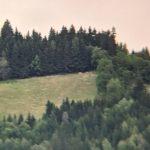 STARTVERBOT am Holzbauer  2021-07-02