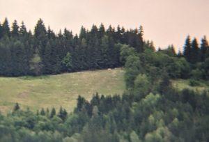 Holzbauer_2021-07-02